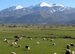 Ομάδα Εκδρομών-Ορειβασίας                                                                    Κυριακή 4 Φεβρουαρίου- Πεζοπορική εκδρομή